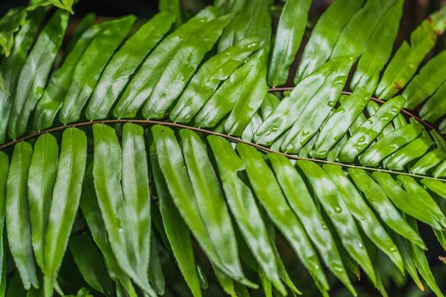 Verde brillante stile astratto vaga dalle foglie delle piante