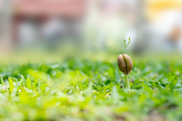 Verde dell'albero del tamarindo dell'arbusto del primo piano