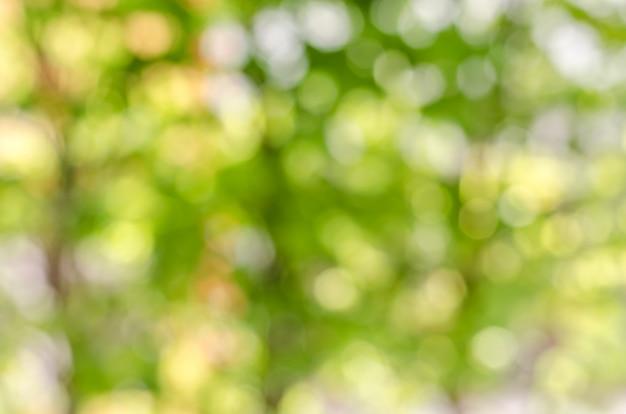 Verde dell'atmosfera e fondo della sfuocatura di giallo con bokeh a mezzogiorno