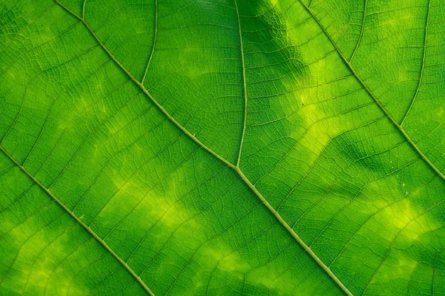 Verde leaved di consistenza