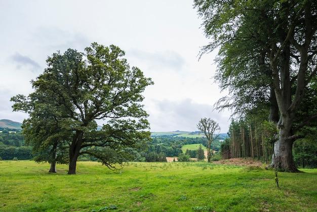 Verde paesaggio calmo nel parco di wicklow