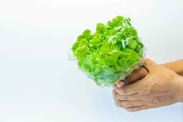 Verdura verde su sfondo bianco