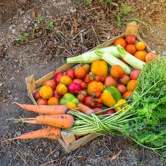 Verdure biologiche dal giardino di casa