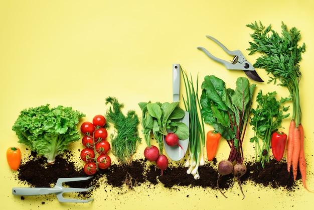 Verdure biologiche e attrezzi da giardino. vista dall'alto di carota, barbabietola, pepe, ravanello, aneto, prezzemolo, pomodoro, lattuga.