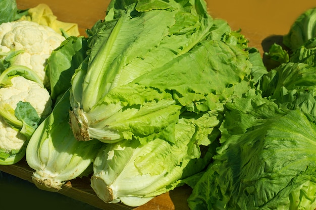 Verdure della lattuga in all'aperto in un giorno soleggiato