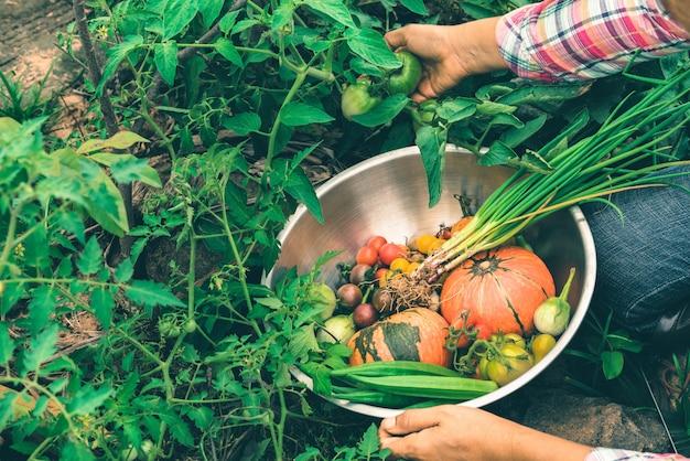 Verdure di raccolta femminili organiche all'azienda agricola, verdure raccolte di stagione, agricoltura biologica per il sano