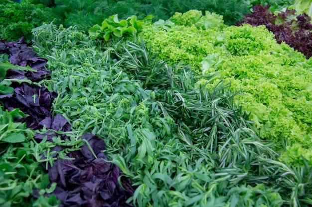 Verdure e lattuga fresche sul contro mercato