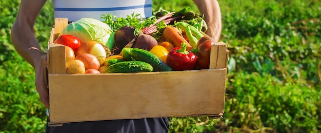 Verdure fatte in casa nelle mani degli uomini. raccogliere. messa a fuoco selettiva.