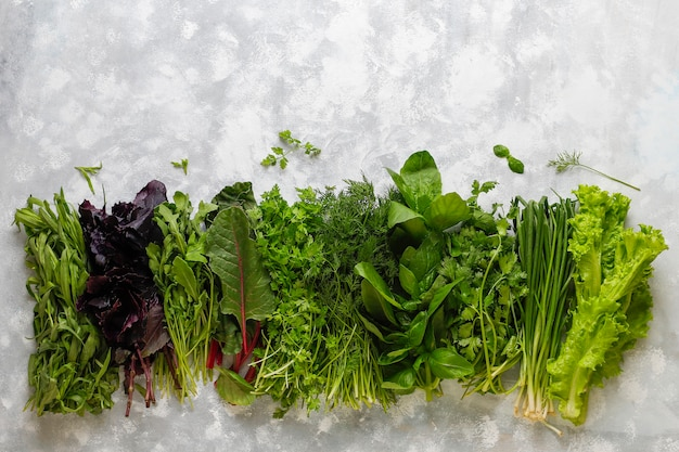 Verdure fresche basilico, coriandolo, lattuga, basilico viola, coriandolo di montagna, aneto, cipolla verde in scatole di plastica su cemento grigio