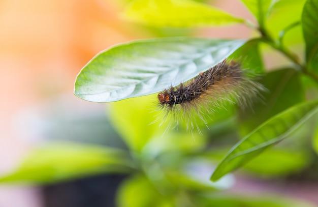 Verme che mangia foglia sul fondo della sfuocatura della foglia verde