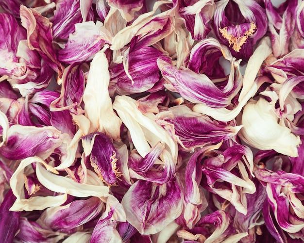 Versato petali secchi dai fiori di tulipani. molti petali secchi. fon floreale naturale.
