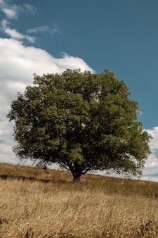 Verticale di un albero verde nel mezzo di un campo durante la caduta