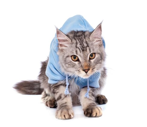 Vestito gatto maine coon
