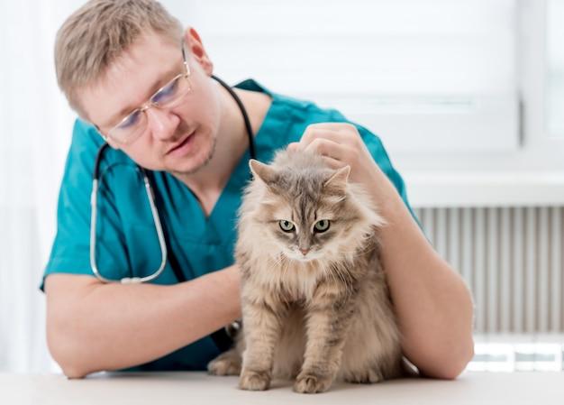 Veterinario che effettua controllo regolare di un gatto all'ufficio veterinario