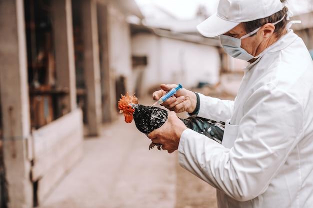 Veterinario in camice bianco, cappello e maschera protettiva durante l'iniezione al gallo malato. esterno rurale.