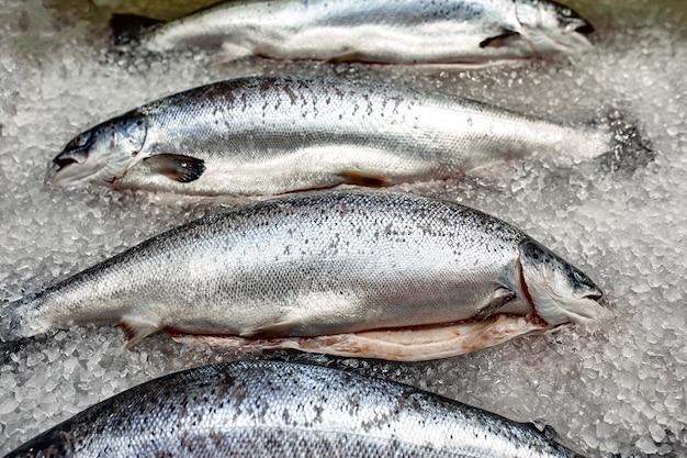 Vetrina con pesce fresco su ghiaccio, storione, beluga, salmone,