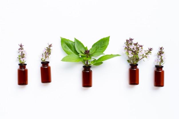 Vetro da bottiglia dell'olio essenziale con le foglie e il fiore dolci del basilico su bianco