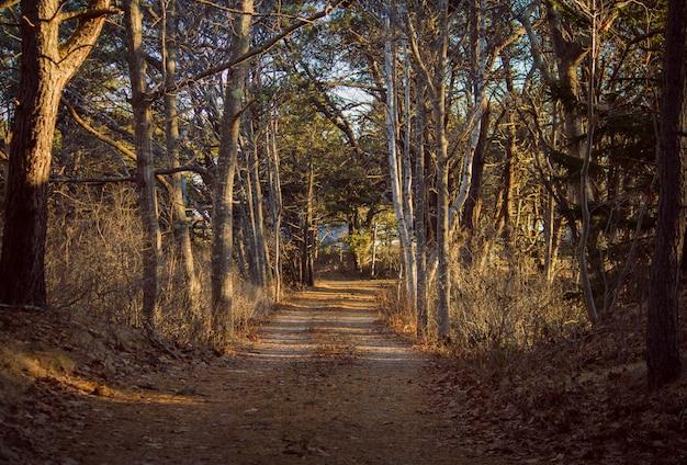 Via stretta che attraversa una foresta con grandi alberi su entrambi i lati in una giornata di sole