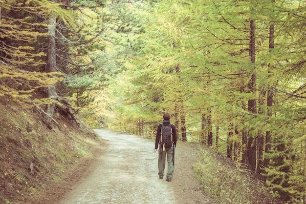 Viaggiatore con zaino e sacco a pelo che cammina nel bosco di larici delle alpi francesi italiane. stagione autunnale colorata. immagine tonica e non controllata.