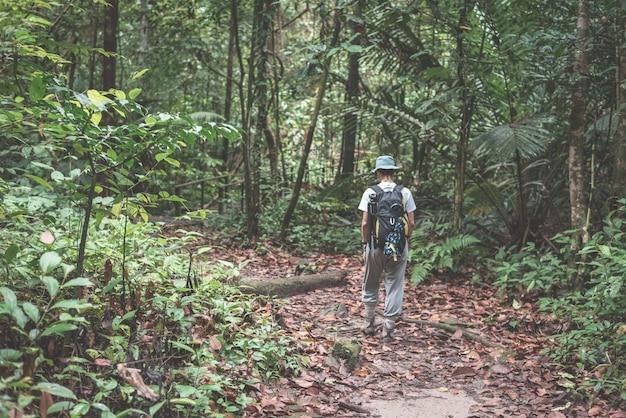 Viaggiatore con zaino e sacco a pelo che esplora la giungla maestosa del parco nazionale di kubah, west sarawak, borneo, malesia.