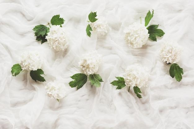 Viburno di fiori e fiori bianchi