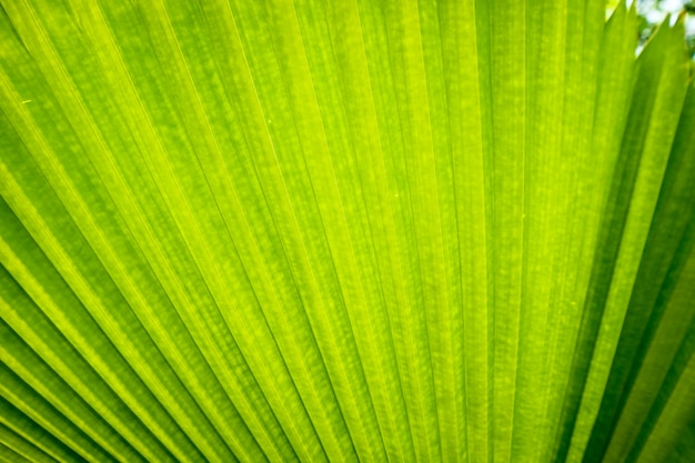 Vicino alla trama di foglie di palma verde