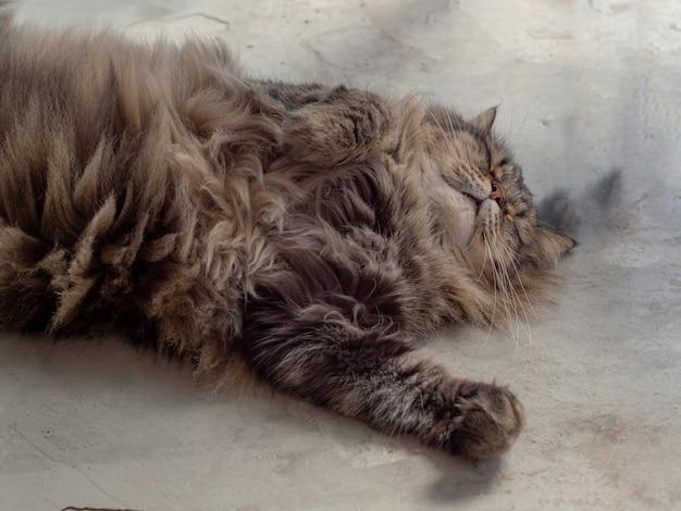 Vicino gatto sdraiato sul pavimento