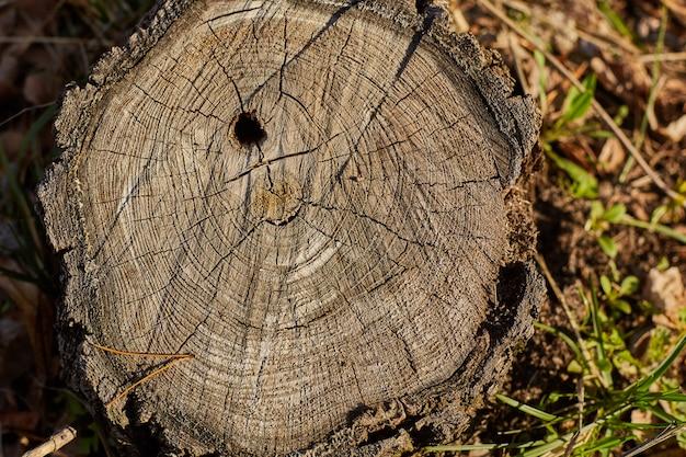 Vicino vecchia struttura di legno per lo sfondo.