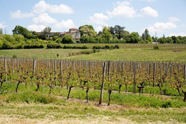 Vigneti nella regione di bordeaux durante la primavera