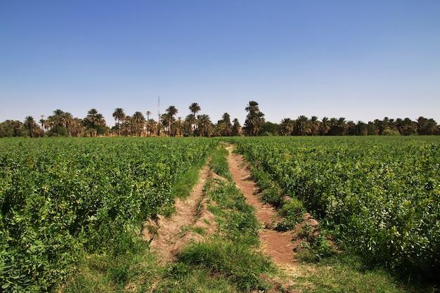 Villaggio del sudan sul fiume nilo