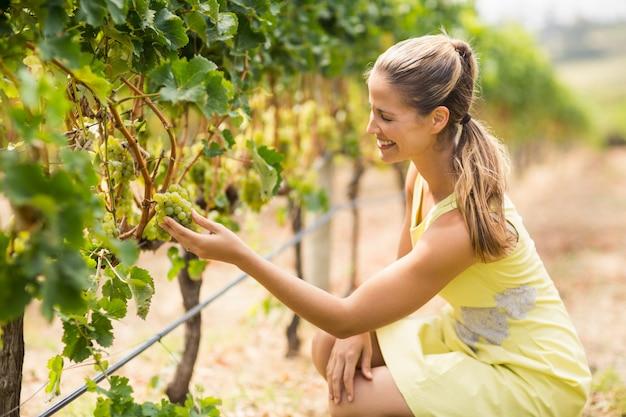 Vinaio femminile che controlla l'uva
