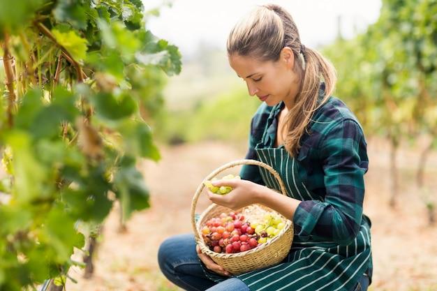 Vinaio femminile che tiene un cestino dell'uva