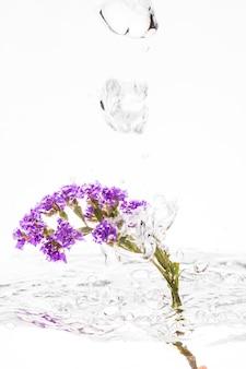 Viola sempreverde che cade nell'acqua
