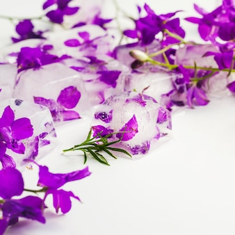 Violette in cubetti di ghiaccio