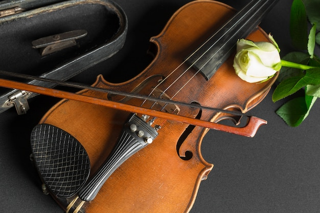 Violino e rosa