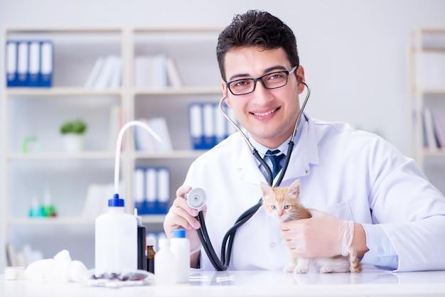 Visita veterinaria del gatto per controlli regolari