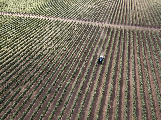 Vista aerea aerea dal drone alla vigna con il trattore