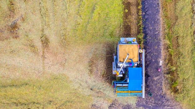 Vista aerea aerea della macchina della mietitrice che funziona nel giacimento del riso da sopra