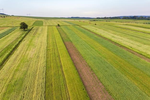 Vista aerea dei campi verdi di agricoltura in primavera con vegetazione fresca dopo la semina della stagione.