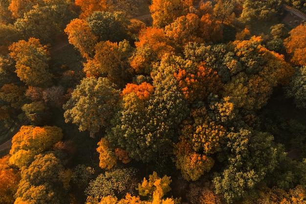 Vista aerea del fuco del paesaggio della foresta di autunno.