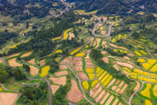 Vista aerea del giacimento dorato del riso del terrazzo a hoshitoge, niigata, giappone