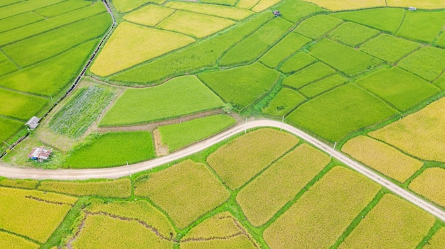 Vista aerea del modello differente del paesaggio verde e giallo del giacimento del riso alla mattina in tailandia del nord