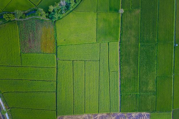 Vista aerea del terreno coltivabile / giacimento del riso in tailandia