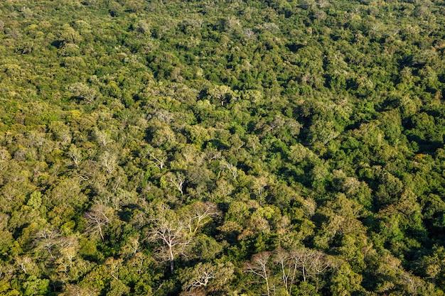 Vista aerea della foresta tropicale