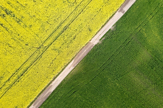 Vista aerea della strada a terra diritta nei campi verdi e gialli con le piante di colza di fioritura il giorno soleggiato di estate o della primavera. fotografia di droni.