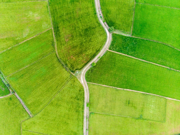 Vista aerea delle risaie verdi con la strada
