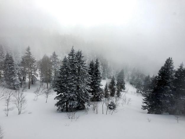 Vista aerea di alberi di pino coperti di neve, paesaggio invernale