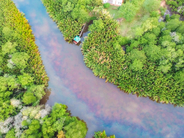 Vista aerea di foreste e montagne verdi.