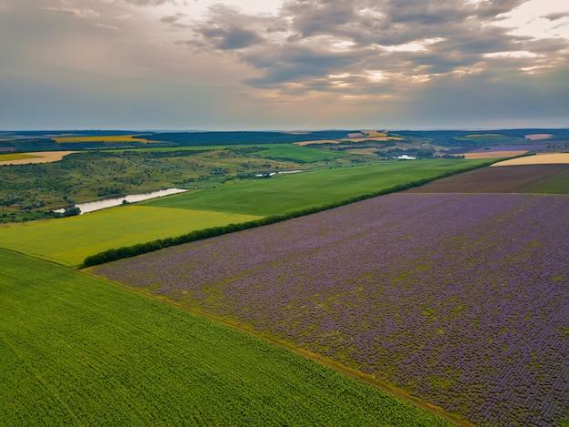 Vista aerea di un paesaggio con campo di lavanda