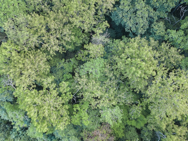 Vista aerea drone foresta verde estate. giornata della terra, protezione dell'ambiente.